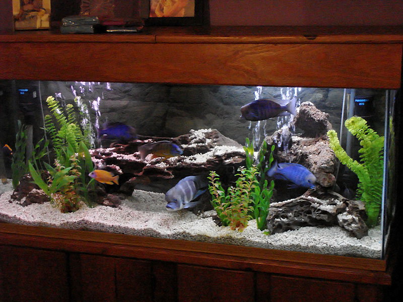 freshwater aquarium aquascape design ideas google search - Freshwater Aquarium Design Ideas